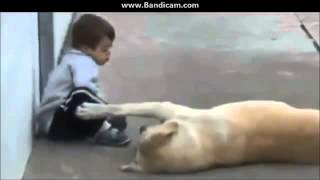 собаки -  это самое замечательное создание природы