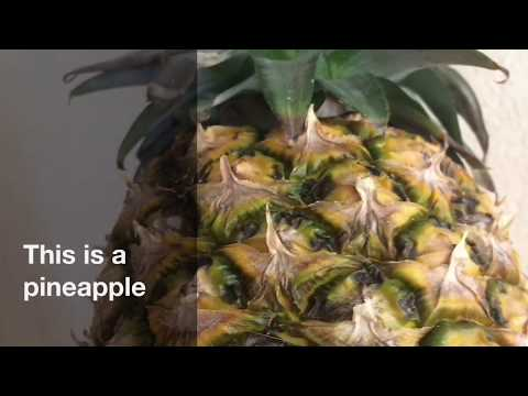 CURE FOR CAT PINEAPPLE ALLERGIES!!!!