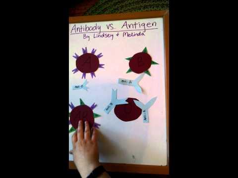 Antibody vs antigen
