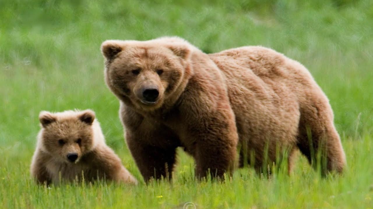 ١٠ حيوانات اصطادها البشر حتى الانقراض