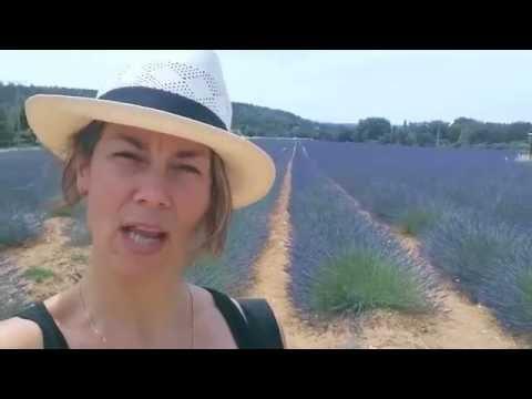 Új Francia szó : Levendula