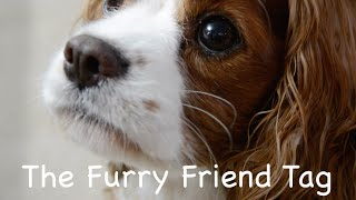The Furry Friend Tag! Thumbnail