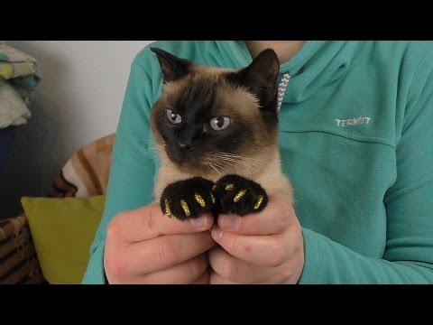 Колпачки для ногтей для кошек