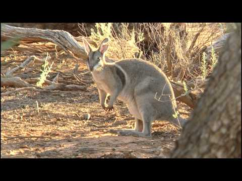 Before It's Too Late - Mini Marsupials