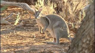 Before It's Too Late - Mini Marsupials