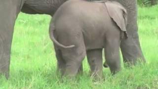 Amboseli Baby Boom
