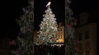 Vánoční strom v Praze 2016 / Рождественская ёлка в Праге 2016 / Christmas Tree in Prague 2016