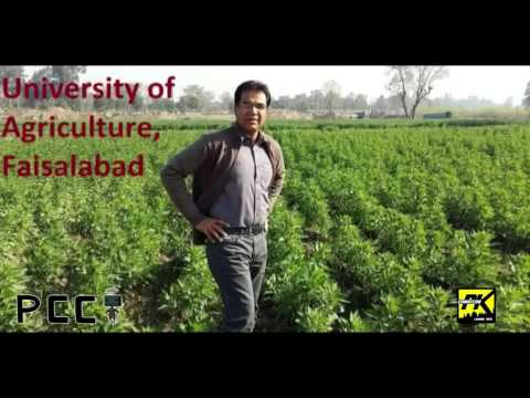 Dr Shehzad Basra 01