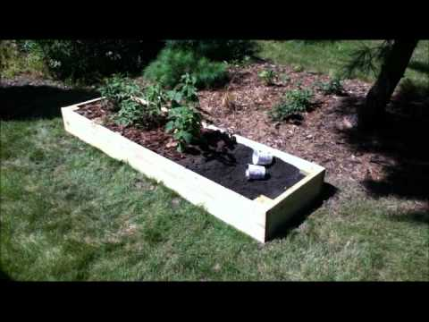 Building A Raised Bed For Raspberries Youtube