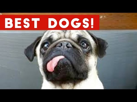 Top Best Dog Video Bloopers, Viral Clips & Funniest Moments Weekly Compilation | | Funny Pet Videos