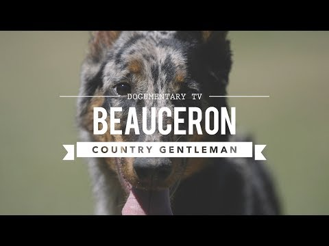 ALL ABOUT BEAUCERON: THE COUNTRY GENTLEMAN