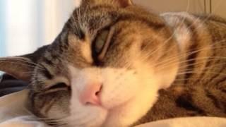 My cat during REM sleep