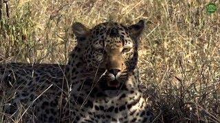Safari Live's Sunset Safari Drive at 3:00 PM on May 08, 2018 ( Xiduku & Wild Dogs )