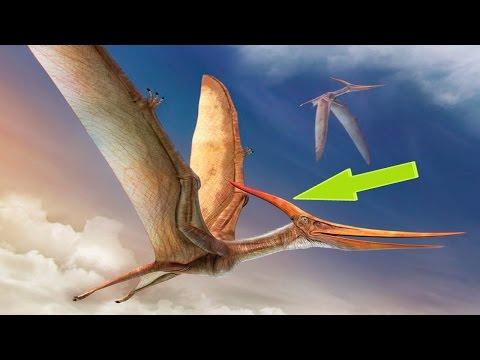 Гигантские Летающие Динозавры