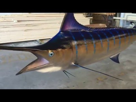 Blue Marlin Mount 360 View - Gray Taxidermy Fishmounts, Custom Fish Reproductions