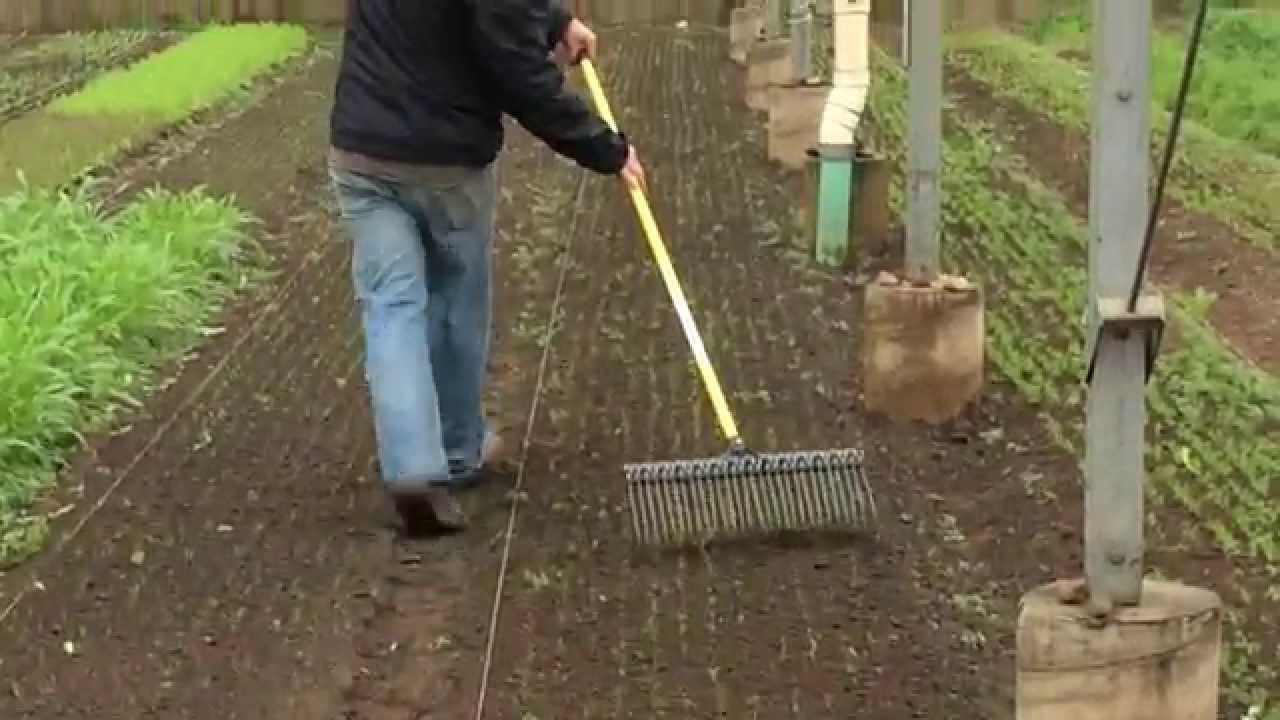 Jack Algiere Demonstrates the Tine Weeding Rake - YouTube