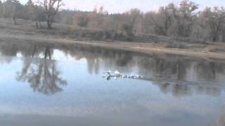 выставка голубей в Северодонецке 2015 003
