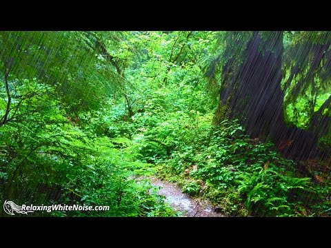 Lush Rain in Forest Sounds | Fall Asleep Quickly & Sleep Well All Night | 10 Hours White Noise