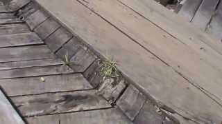 மஞ்சோலை - மரப்பாலம். Mancholai - Wooden Bridge.
