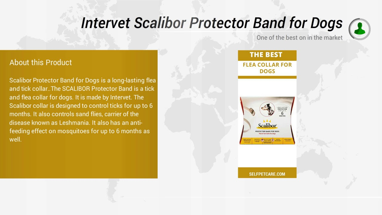 Intervet Scalibor Protector Band for Dogs