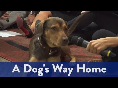 The Kidd Kraddick Morning Show - A Dog's Way Home Interview