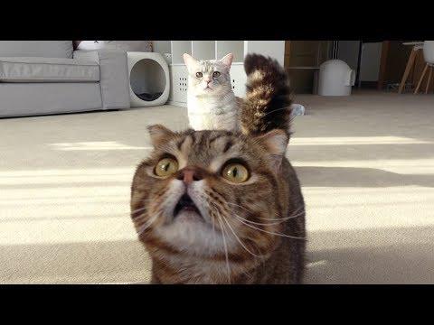 고양이들은 자기 이름을 알아들을까?