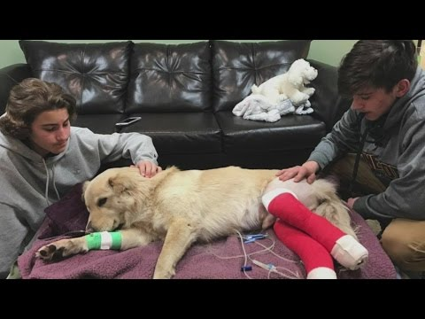 Wis. Siblings Refuse To Leave Recovering Pup's Side