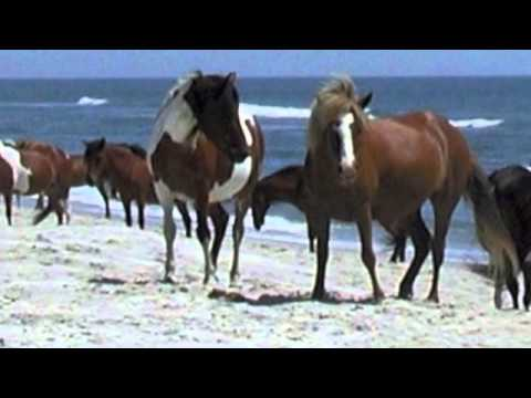 Misty of Chincoteague