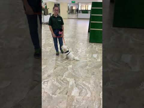Mona the youngest professional dog trainer in the world training a toy dog