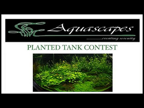 Planted Tank Contest From Aquascapes Hawaii