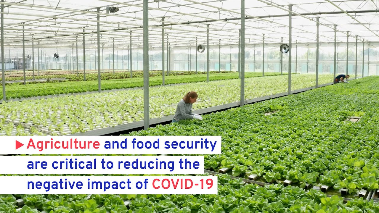 COVID-19: Protecting workers: Sectoral impact: Agriculture and food  security crucial to COVID-19 recovery