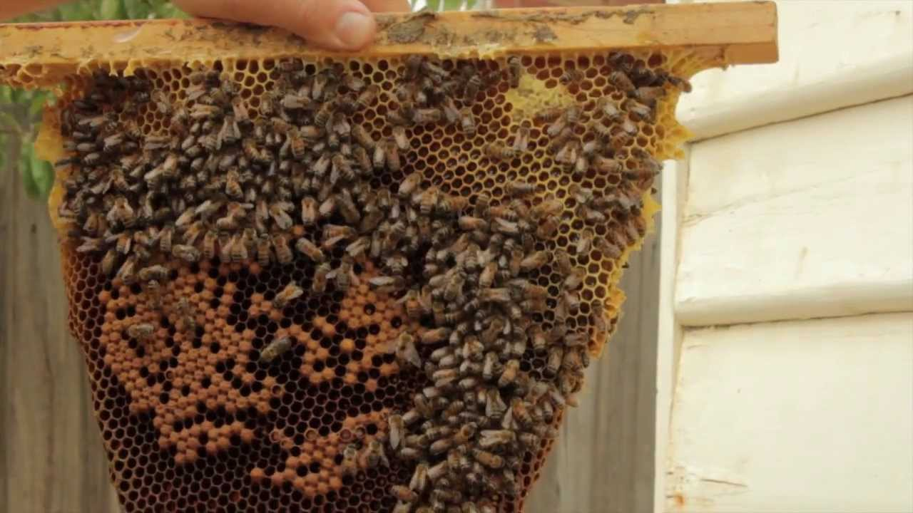 Top Bar Beekeeping