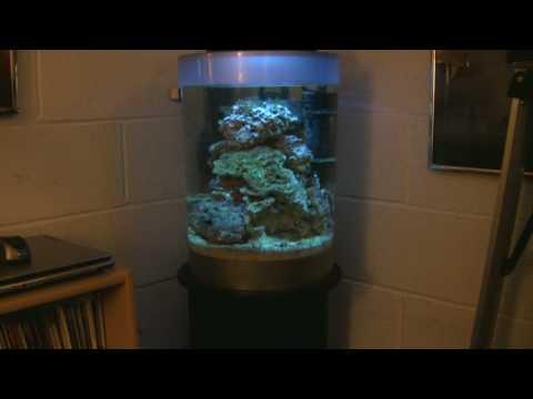 Biube FOWLR / Reef Tank