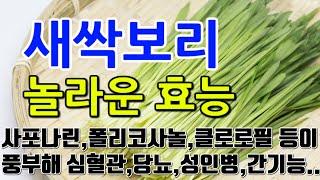 [#새싹보리효과] 새싹보리의 놀라운 효능 10가지 (사…