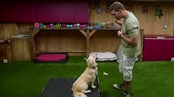 Lucky Dog's Brandon McMillan talks pups and pooches before the Global Pet Expo