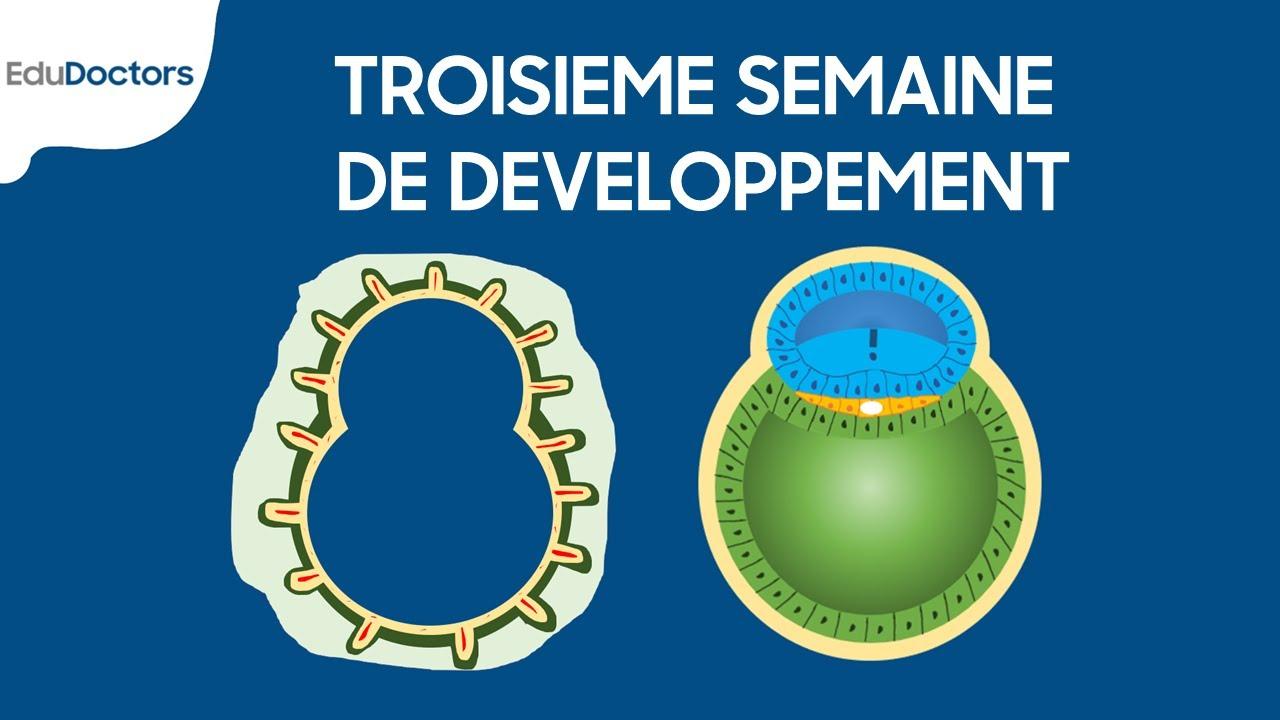 Download Troisième semaine de développement - Embryologie générale