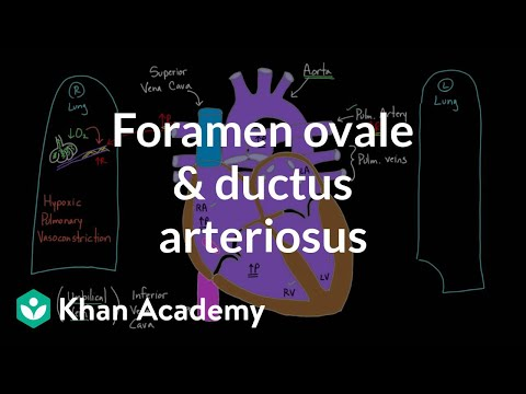 Foramen ovale and ductus arteriosus | Circulatory system physiology | NCLEX-RN | Khan Academy