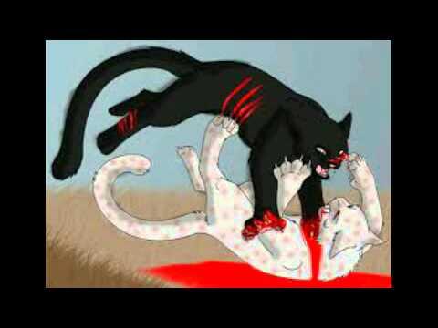 Коты воители убийца бич