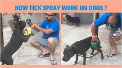 How Tick Spray Work On Dogs ?