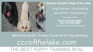 Puppy Training Flanders Nj
