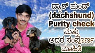 Duchshund dog breed purity check, facts and information in kannada ಡ್ಯಾಷ್ಹಂಡ್ ಬಗ್ಗೆ ಸಂಪೂರ್ಣ ಮಾಹಿತಿ