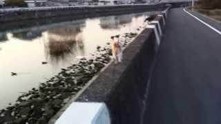 狭いコンクリートの上を猫みたいに走ります.