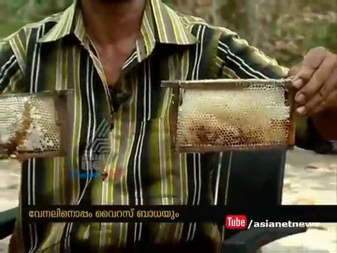 Heavy drought in Kerala : Honey Bee Farmers under crisis #Drought