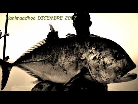 Maldive GT Fishing Expedition  Hanimaadhoo  2017