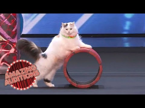 America's Got Talent 2018 -  Funniest / Weirdest / Worst Auditions - Part 1