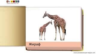 Навчальні презентації картки 'Мої перші тварини та птахи' за метод. Домана