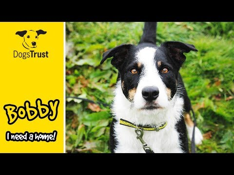 Bobby is a Clever Little Jack Russell Terrier Who Loves to Train! | Dogs Trust Bridgend