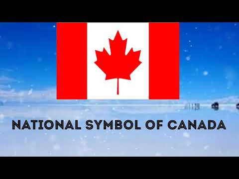 National Symbol Of Canada National Day Bird Animal Flower And