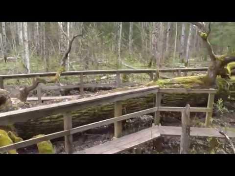 Soomaa National Park Beaver trail. Estonia