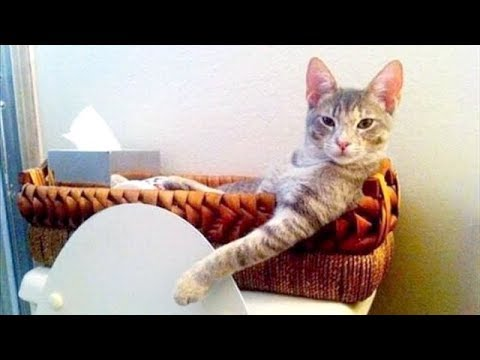 You will LAUGH SO HARD that your NEGHBOURS WILL THINK YOU'RE CRAZY - FUNNY ANIMAL compilation